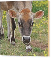 Look Into My Eyes - Jersey Cow - Square Wood Print