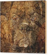 Look Into My Eyes Wood Print by Judy Wood