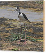 Look Out For That Egret- Mother Stilt Said Wood Print