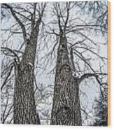 Looking At Tree Tops After A Winter Snow Storm Wood Print