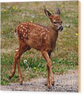Looking For Mom - Pacific Northwest Washington Wood Print