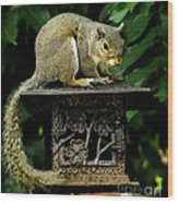 Looking For Nuts Wood Print
