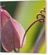 Looking Into A Pink Bud Wood Print