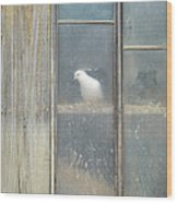 Looking Out The Coop Wood Print
