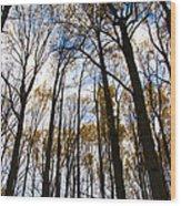 Looking Skyward Into Autumn Trees Wood Print