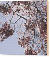 Looking Through Cherry Blossoms Wood Print