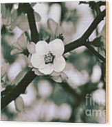 Looking Through The Blossoms 2 By Kaye Menner Wood Print
