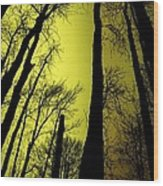 Looking Through The Naked Trees  Wood Print