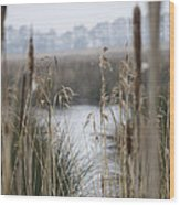 Looking Through The Reeds Wood Print