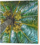 Looking Up A Coconut Tree Wood Print