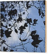 Looking Up Wood Print