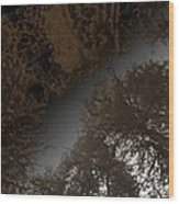 Looking Up Through Copper Forest Wood Print