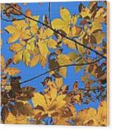 Looking Up To Yellow Leaves Wood Print