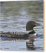 Loon And Reflection Wood Print