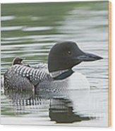 Loon Chick Rise And Shine Wood Print