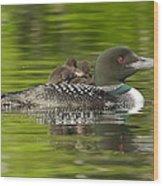 Loon Chicks - Best Buddies Wood Print
