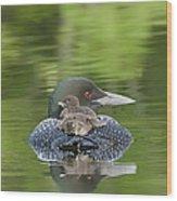 Loon Chicks -  Nap Time Wood Print