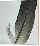 Loon Feather Wood Print