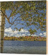 Loon Lake In Autumn With White Birch Tree Wood Print