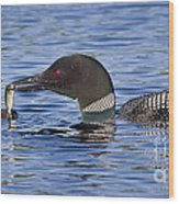 Loon Offers Fish To Chick Wood Print by Jim Block