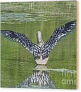 Loon Wings Wood Print