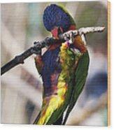 Lorikeet Bird Wood Print