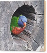 Lorikeet - Peek-a-boo Wood Print