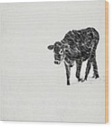Lost Calf Struggling In A Snow Storm Wood Print