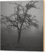 Lost In The Fog Wood Print