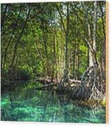 Lost Lagoon On The Yucatan Coast Wood Print