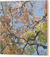 Lost Maples Wood Print