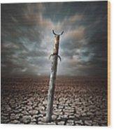 Lost Sword Wood Print by Carlos Caetano