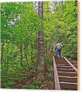 Lots Of Steps On La Chute Trail In Forillon Np-qc Wood Print