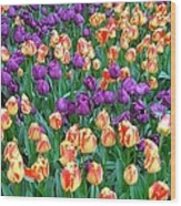 Lots Of Tulips Wood Print