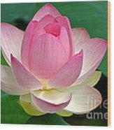 Lotus 7152010 Wood Print