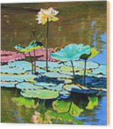 Lotus Above the Lily Pads Wood Print