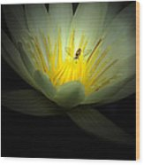 Lotus And Bee Wood Print