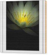 Lotus And Bee Poster Wood Print