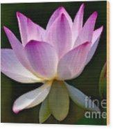 Lotus And Buds Wood Print by Susan Candelario
