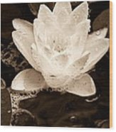 Lotus Blossom Wood Print by John Pagliuca