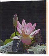 Lotus Enchantment Wood Print