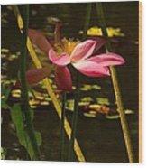 Lotus Flower At The West Lake Wood Print