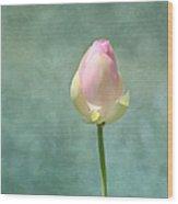 Lotus Flower Bud Wood Print