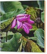 Lotus Flower- Gungarre Billabong Wood Print