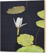 Lotus Flower- Gungarre Billabong V2 Wood Print