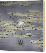 Lotus Flower- Gungarre Billabong V3 Wood Print