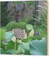 Lotus Flower In Lily Pond Wood Print
