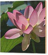 Lotus - Flowers Wood Print