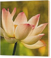 Lotus In Morning Light Wood Print