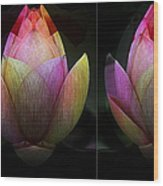 Lotus In Transition Wood Print